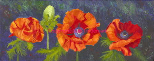 summer poppies col